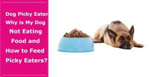 dog picky eater
