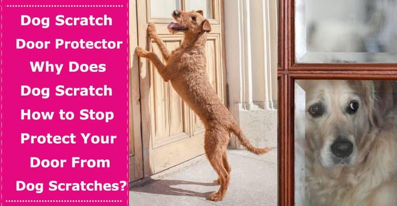 dog scratch door protector