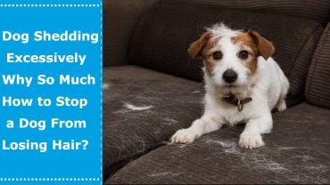 dog shedding excessively
