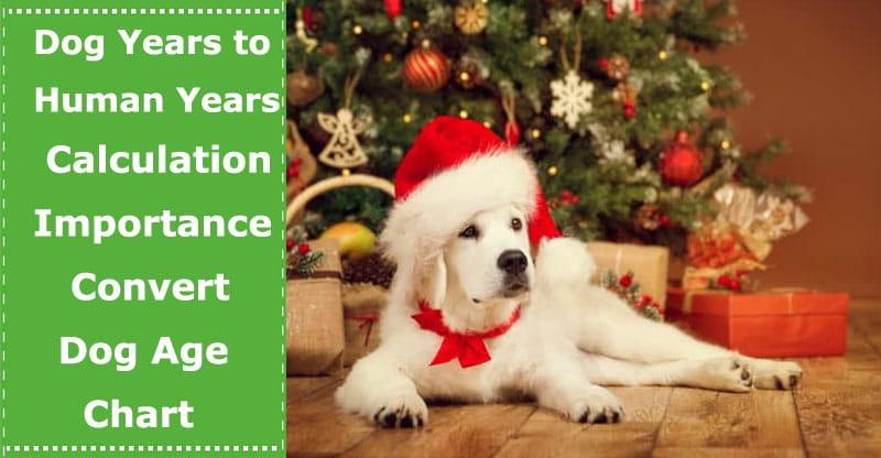dog years to human years