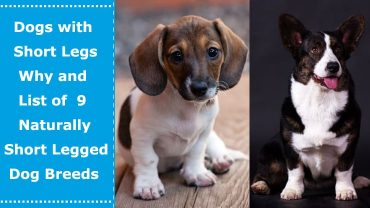 dogs with short legs