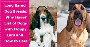 long eared dog breeds