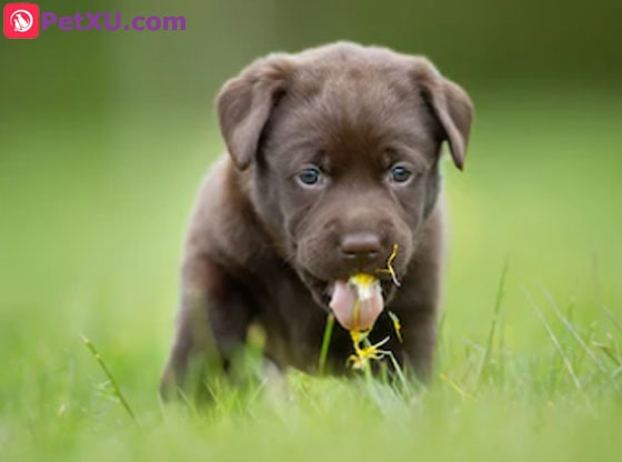 Why Do Dogs Eat Grass? What Does It Mean When a Dog Eats