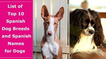 spanish dog breeds