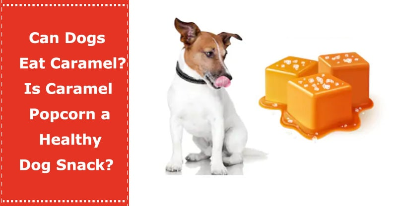 can dogs eat caramel