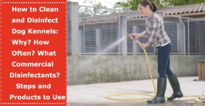 disinfect clean dog kennel