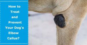 dog elbow callus