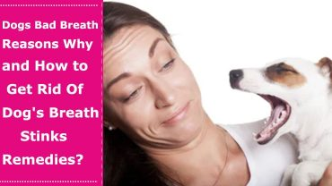 dogs with bad breath