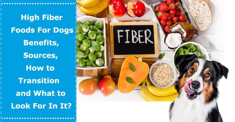 high fiber foods for dogs