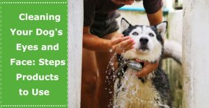 how to clean dogs eyes face