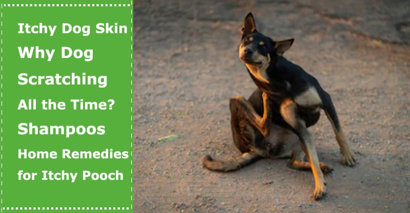 itchy skin dogs