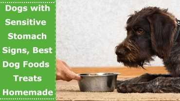 sensitive stomach dog foods