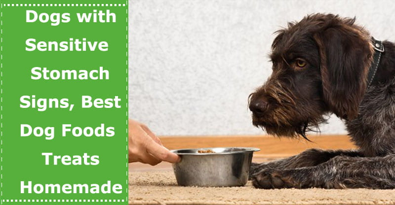 sensitive stomach dog foods