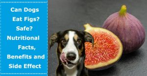 can dogs eat figs