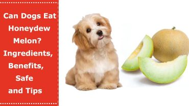 can dogs eat honeydew melon