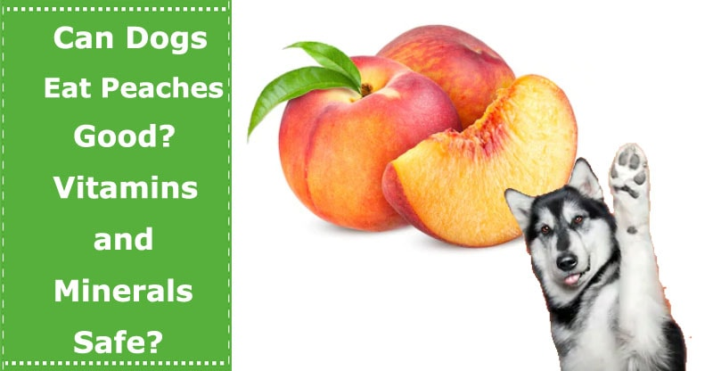 can dogs eat peach
