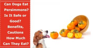 can dogs eat persimmons