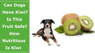 can dogs have kiwi