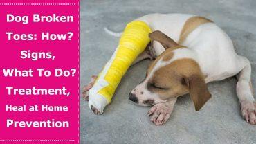 dog broken toes