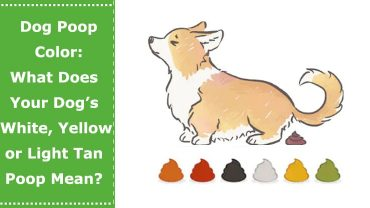 dog poop color