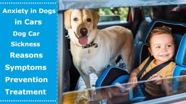 anxiety in dogs in cars