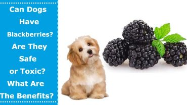 can dogs have blackberries