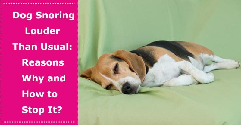 dog snoring