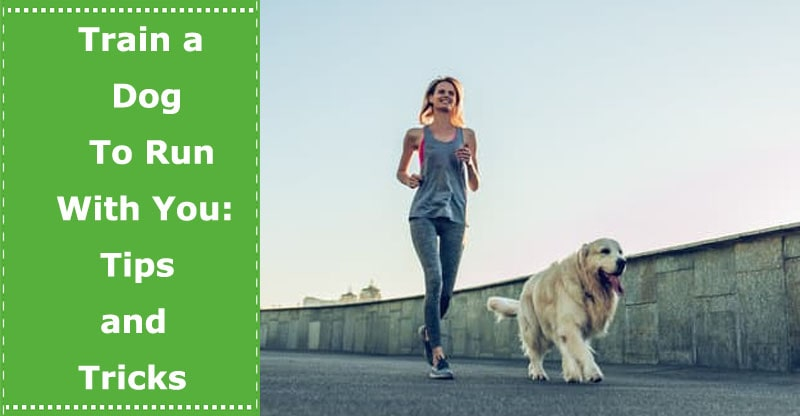 train a dog to run with you