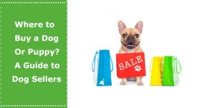 where to buy a dog