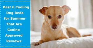 cooling dog beds for summer