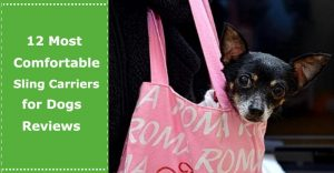 sling carriers for dogs