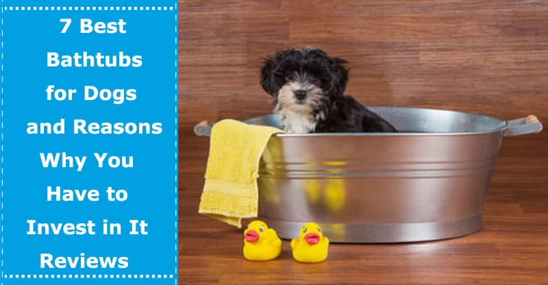 bathtubs for dogs reviews