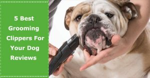 dog grooming clippers best reviews