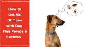 dog flea powder