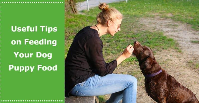 useful tips on feeding your dog puppy food