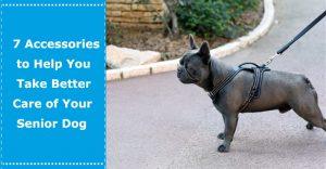 Accessories to Take Care Senior Dog